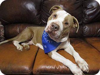 Terrier (Unknown Type, Medium) Mix Dog for adoption in Williamsburg, Virginia - Puddin