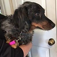 Adopt A Pet :: Jim - Morrisville, PA