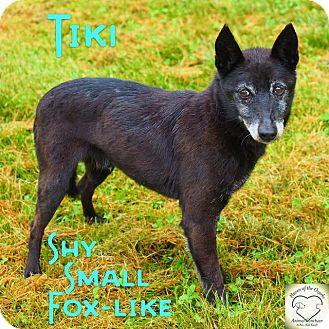 Terrier (Unknown Type, Small) Mix Dog for adoption in Washburn, Missouri - Tiki