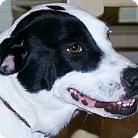 Adopt A Pet :: Sadie - Nokomis, FL