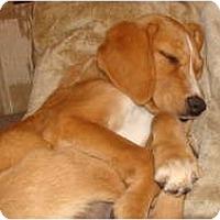 Adopt A Pet :: Aspen - New Boston, NH