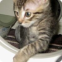 Adopt A Pet :: Sandy - Dallas, TX