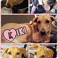 Adopt A Pet :: Kiki - East Rockaway, NY