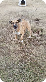 St. Bernard Mix Dog for adoption in Owenboro, Kentucky - AQUA