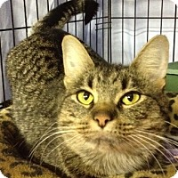 Adopt A Pet :: Mama Gato - Byron Center, MI