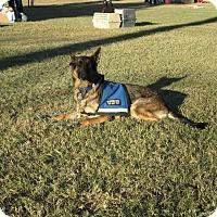 Adopt A Pet :: Sasha Von Altenberg - Phoenix, AZ
