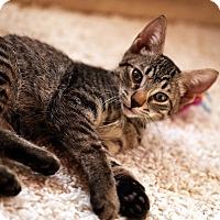 Adopt A Pet :: Roy - N. Billerica, MA