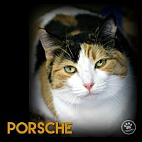 Adopt A Pet :: Porche - Anderson, IN