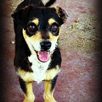 Adopt A Pet :: Jonny - Tijeras, NM