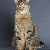 Adopt A Pet :: Gouda - Nashville, TN