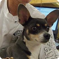 Adopt A Pet :: ELLIE - Medford, WI
