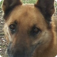 Adopt A Pet :: Rex - Inverness, FL