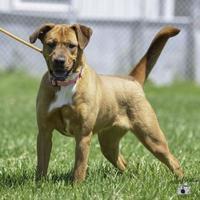 Hound (Unknown Type) Mix Dog for adoption in Ottumwa, Iowa - Tyra