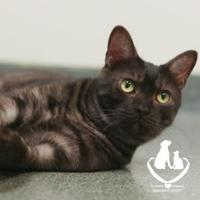 Adopt A Pet :: Larry - Mt Pleasant, MI