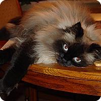 Adopt A Pet :: Kringle - Columbus, OH