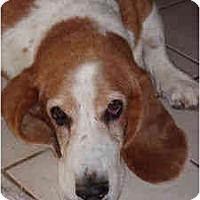 Adopt A Pet :: Sienna - Phoenix, AZ