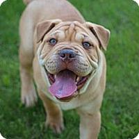 Adopt A Pet :: RichmondADOPTION PENDING - Toronto/Etobicoke/GTA, ON