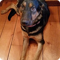 Adopt A Pet :: Isabella - Woodstock, ON