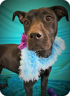 Terrier (Unknown Type, Medium) Mix Dog for adoption in Flint, Michigan - Electra