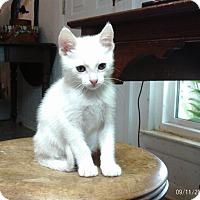Adopt A Pet :: Wynonna - Houston, TX
