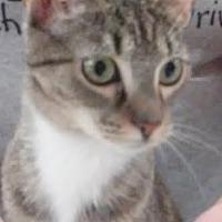 Adopt A Pet :: Meme - Columbus, OH