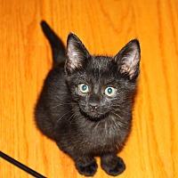 Adopt A Pet :: Elegance - Apex, NC