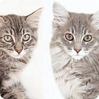Adopt A Pet :: Deborah & Donut (Bonded Pair) - Encinitas, CA