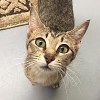 Adopt A Pet :: Suzy - San Leon, TX