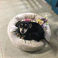 Adopt A Pet :: Maddie - York, SC