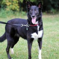 Adopt A Pet :: Sadie - Hastings, MN