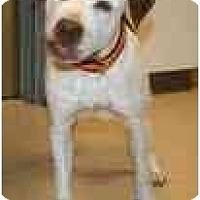 Adopt A Pet :: Moose - Chicago, IL