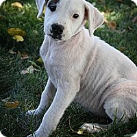 Adopt A Pet :: Sadie - Broomfield, CO