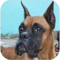 Adopt A Pet :: Don Juan - North Haven, CT