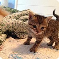 Adopt A Pet :: Eddie - Whitestone, NY
