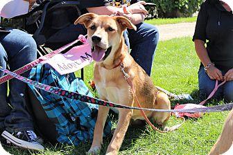 Cattle Dog Mix Dog for adoption in Rochester, Minnesota - Yatta
