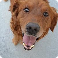Adopt A Pet :: Fletcher - Foster, RI