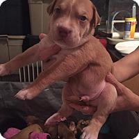Adopt A Pet :: Marco - Burlington, NJ