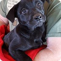 Adopt A Pet :: Zurich - Evergreen, CO