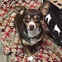 Adopt A Pet :: Leroy - Vacaville, CA