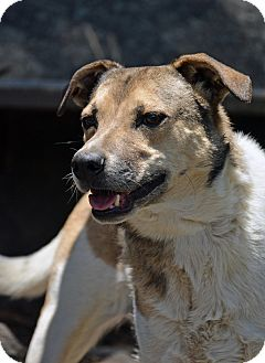 Terrier (Unknown Type, Medium) Mix Dog for adoption in Mountain Center, California - Cutie
