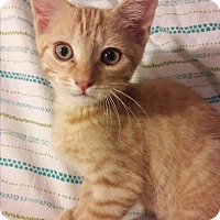 Adopt A Pet :: Kittens! - Worcester, MA