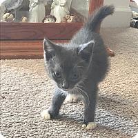Adopt A Pet :: Milo - Snow Hill, NC
