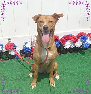 Labrador Retriever Mix Dog for adoption in Marietta, Georgia - MELODY