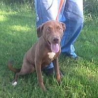 Adopt A Pet :: Lucia - Ardmore, OK