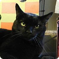 Adopt A Pet :: Snoopy - Winston-Salem, NC