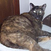 Adopt A Pet :: Sarah and Cherry (and Sammy) - newfoundland, PA