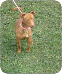 Dachshund Mix Dog for adoption in Greenville, Rhode Island - Dallas