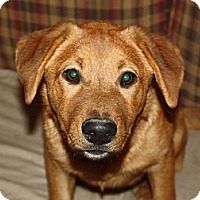 Adopt A Pet :: Kimmie - kennebunkport, ME