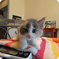 Adopt A Pet :: HELLEN - Phoenix, AZ