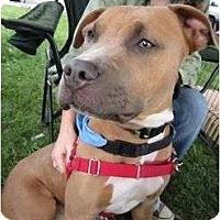 Adopt A Pet :: Moose - Dallas, PA